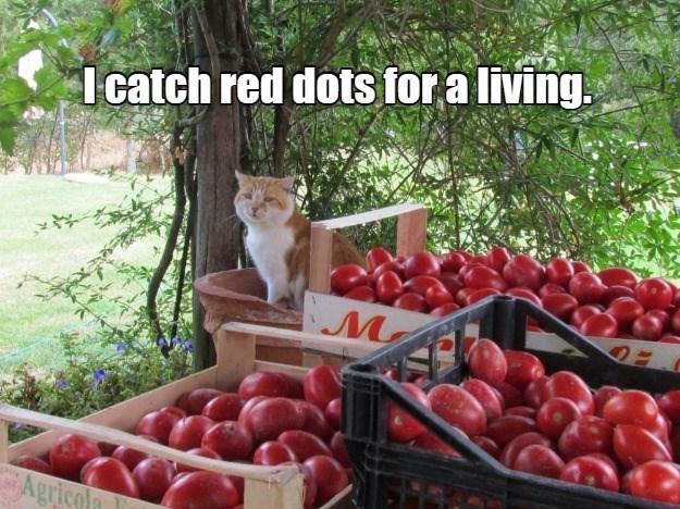 Food - I catch red dots for a living. Agricola