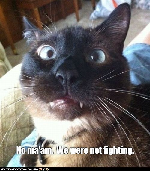 Cat - No ma'am. We were not fighting. TOANHASCHEEZBURGER.COM G