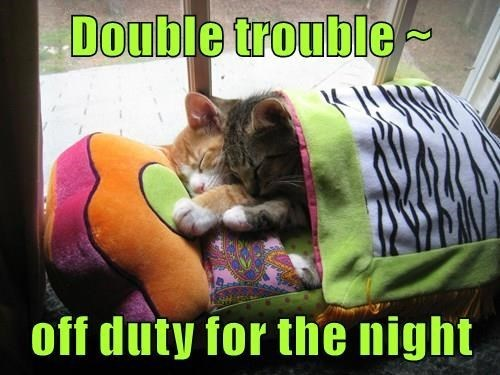 Cat - Double trouble - off duty for the night