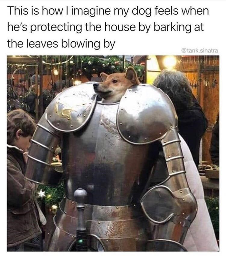Breastplate - This is how I imagine my dog feels when he's protecting the house by barking at the leaves blowing by @tank.sinatra