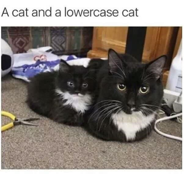 Cat - A cat and a lowercase cat