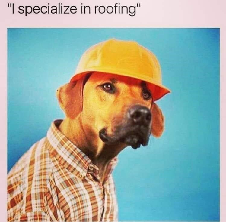 """Dog - """"I specialize in roofing"""""""