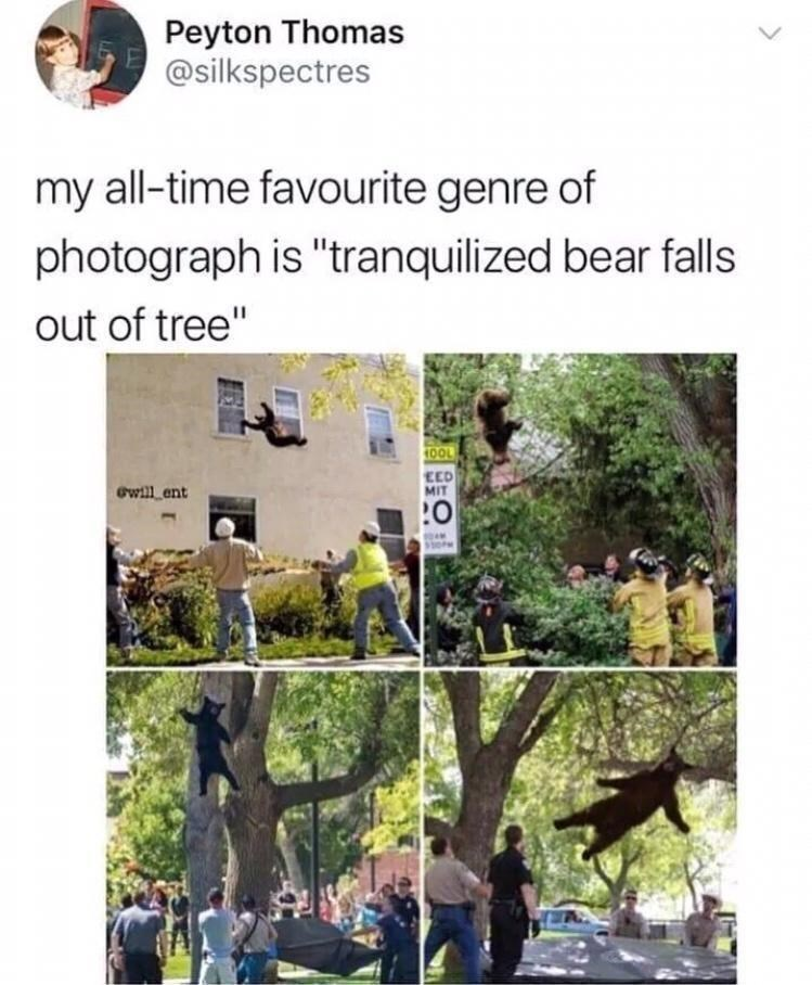 """Plant - Peyton Thomas @silkspectres my all-time favourite genre of photograph is """"tranquilized bear falls out of tree"""" 10OL EED MIT Gwill ent"""