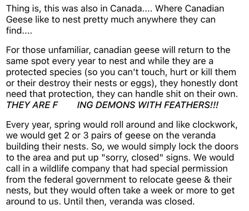 Font - Thing is, this was also in Canada... Where Canadian Geese like to nest pretty much anywhere they can find... For those unfamiliar, canadian geese will return to the same spot every year to nest and while they are a protected species (so you can't touch, hurt or kill them or their destroy their nests or eggs), they honestly dont need that protection, they can handle shit on their own. ING DEMONS WITH FEATHERS!!! THEY ARE F Every year, spring would roll around and like clockwork, we would g
