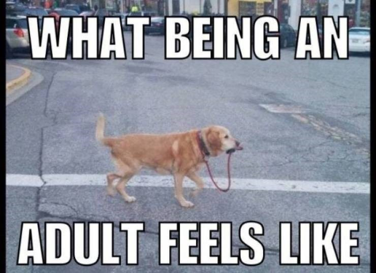 Dog - WHAT BEING AN ADULT FEELS LIKE