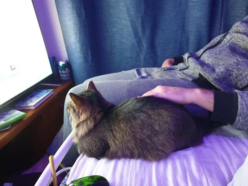 Cat - Dool ng NUAT