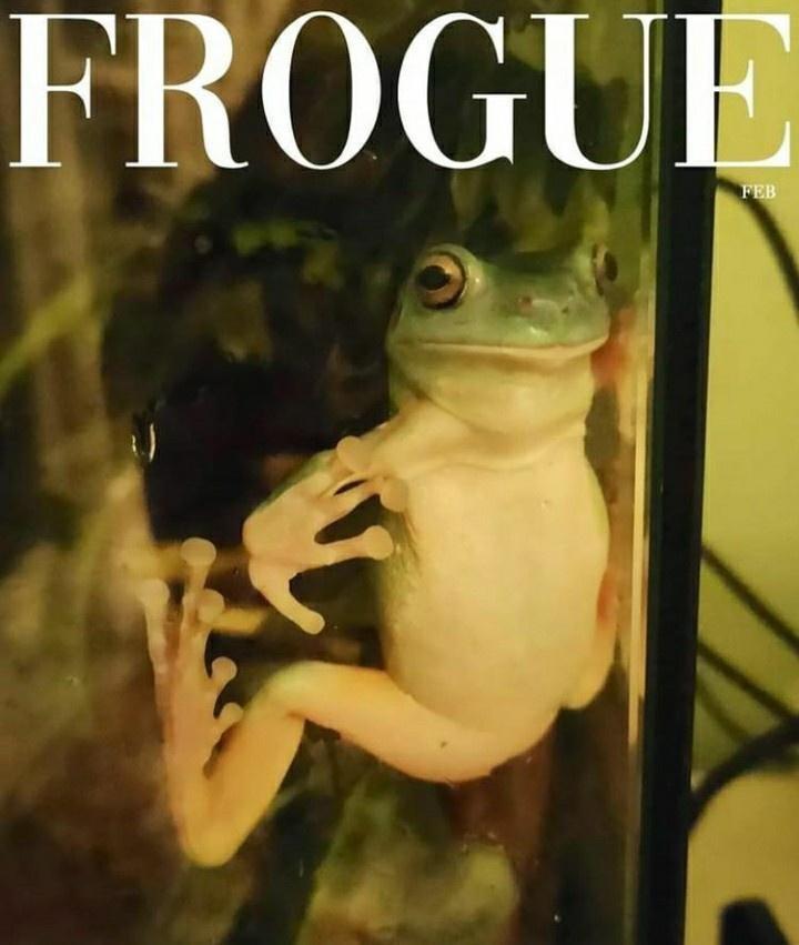 Frog - FROGUE FEB