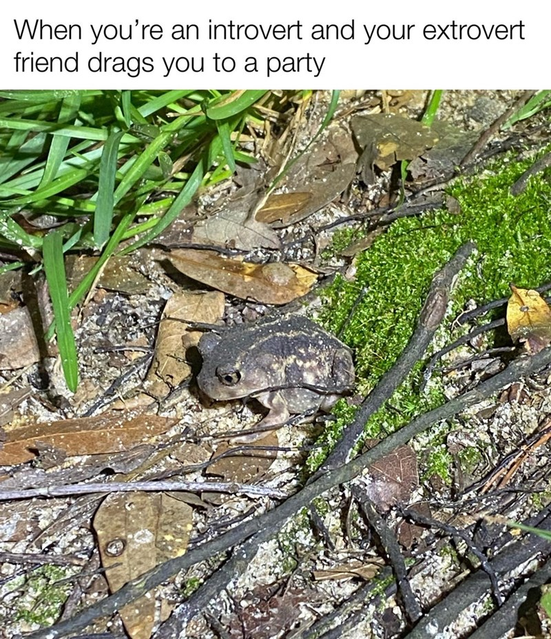 Plant - When you're an introvert and your extrovert friend drags you to a party