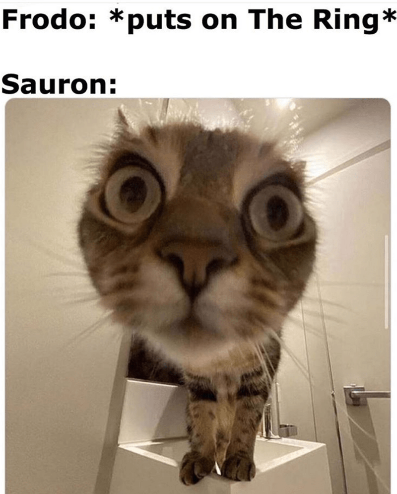 Cat - Frodo: *puts on The Ring* Sauron: