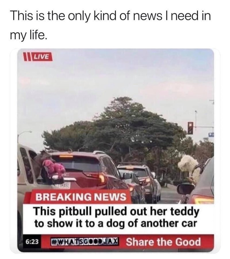 Motor vehicle - This is the only kind of news I need in my life. LIVE EDTEL BREAKING NEWS This pitbull pulled out her teddy to show it to a dog of another car 6:23 #WHAISGOODIAX Share the Good