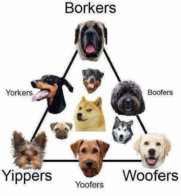 Dog - Borkers Yorkers Boofers Yippers Woofers Yoofers