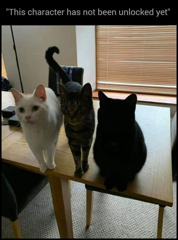 """Cat - """"This character has not been unlocked yet"""""""