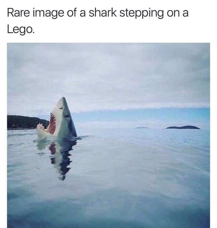 Water - Rare image of a shark stepping on a Lego.