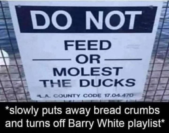 Rectangle - DO NOT FEED OR MOLEST THE D UCKS LA COUNTY CODE 17.04.470 *slowly puts away bread crumbs and turns off Barry White playlist*