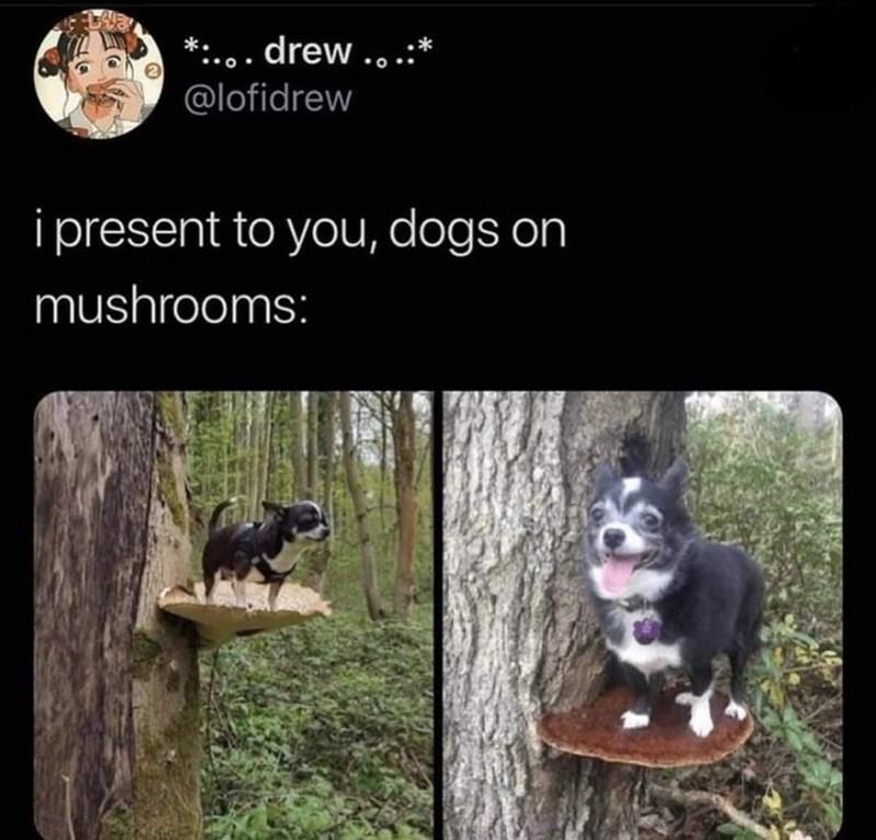 Dog - *:.. . drew ...:* @lofidrew i present to you, dogs on mushrooms: