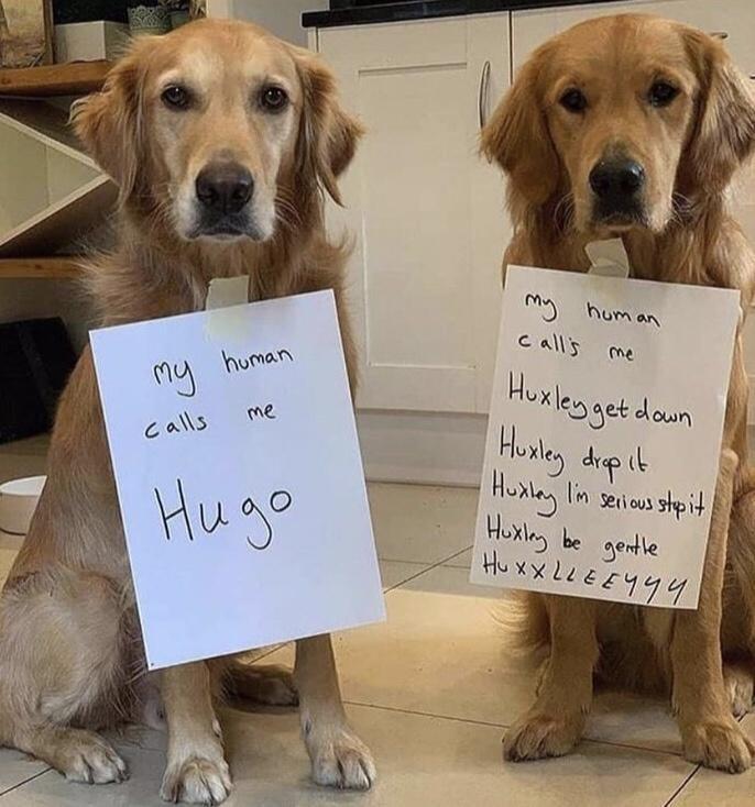 Dog - my hum an c all's me Huxlegget Husley dipit Huxlay lin serious stpit Huxlny be gentle Hu xx 2LEE444 my human down me calls I'm Hugo