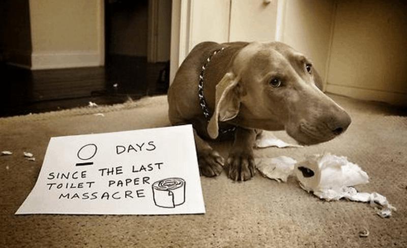 Dog - O DAYS THE LAST SINCE TOILET PAPER MASSACRE