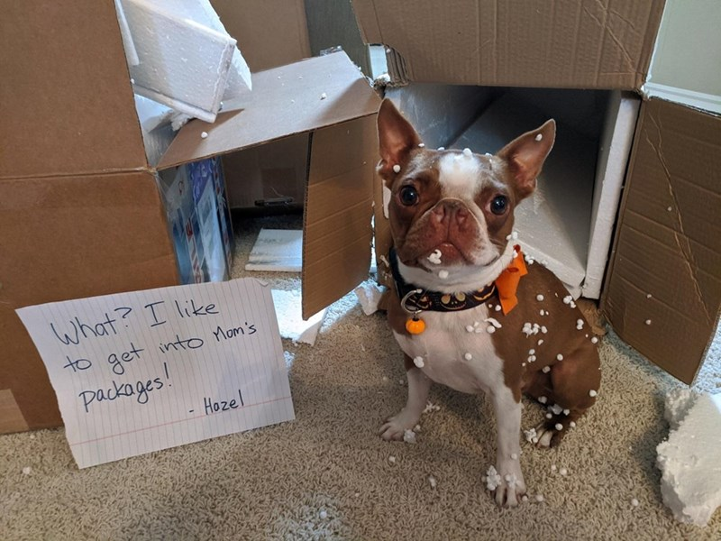 Brown - What? I like get into Mom's packages! - Hozel to