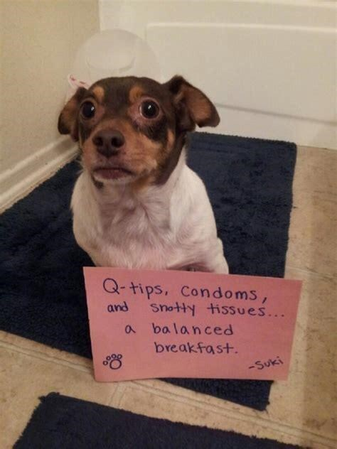 Dog - Q-tips, Condoms, Snotty tissues... a ba lanced and breakfast. -Suki