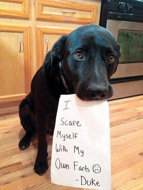Head - Scare Myself With My Qun Farts O - Duke