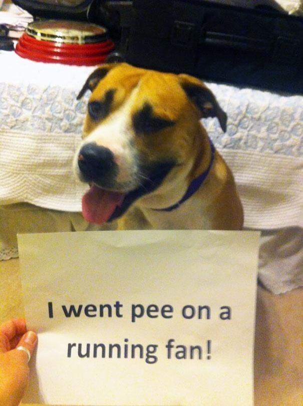 Dog - I went pee on a running fan!