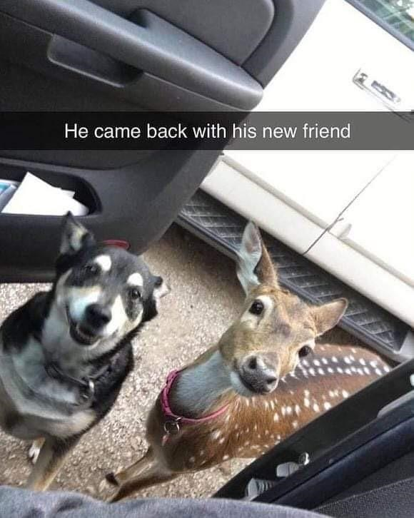 Dog - He came back with his new friend