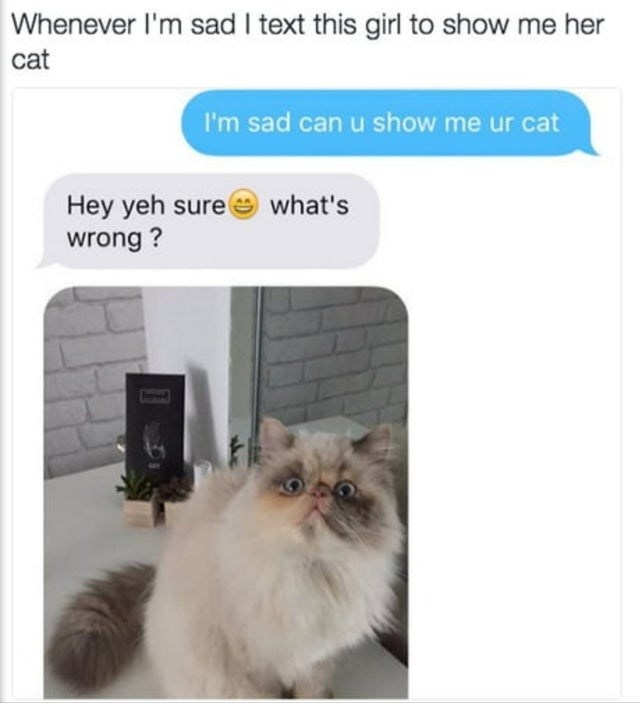 Cat - Whenever l'm sad I text this girl to show me her cat I'm sad can u show me ur cat Hey yeh sure e what's wrong ?