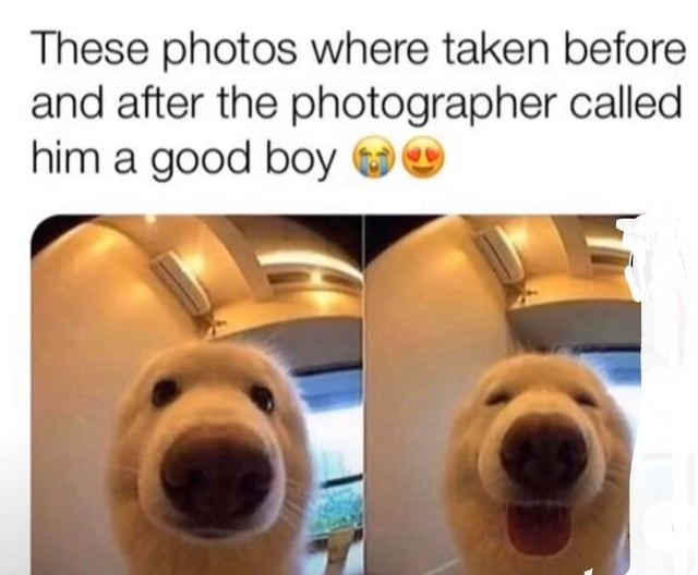 Nose - These photos where taken before and after the photographer called him a good boy 0
