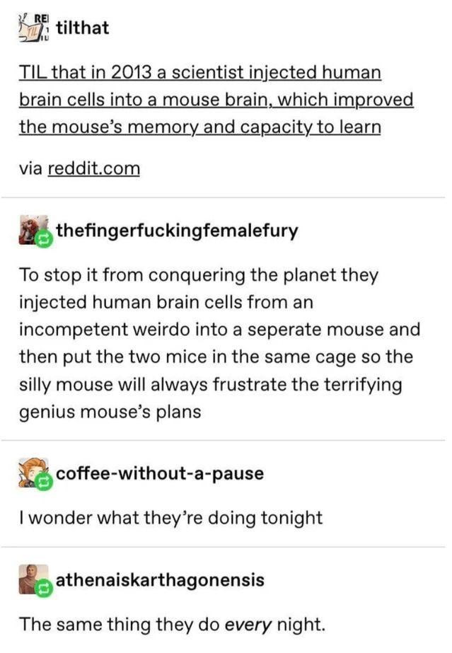Font - REI tilthat TIL that in 2013 a scientist injected human brain cells into a mouse brain, which improved the mouse's memory and capacity to learn via reddit.com thefingerfuckingfemalefury To stop it from conquering the planet they injected human brain cells from an incompetent weirdo into a seperate mouse and then put the two mice in the same cage so the silly mouse will always frustrate the terrifying genius mouse's plans coffee-without-a-pause I wonder what they're doing tonight athenaisk