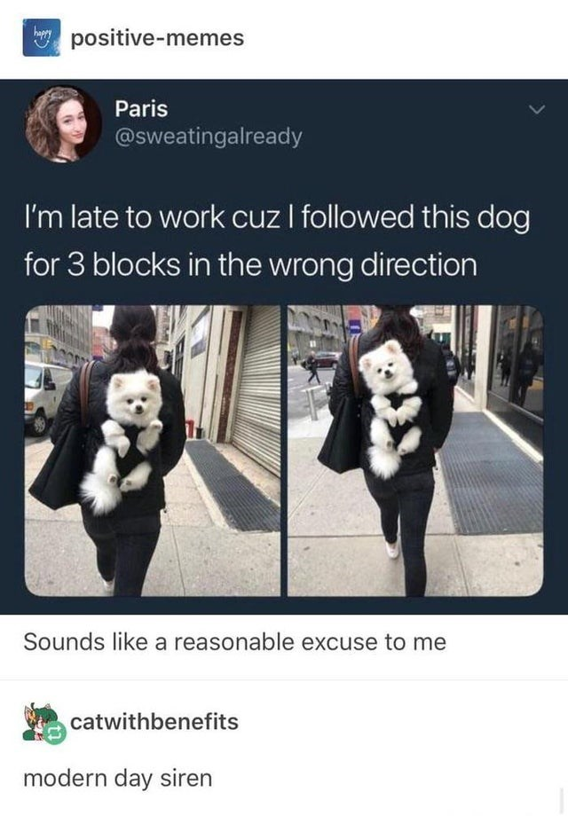 Gesture - positive-memes Paris @sweatingalready I'm late to work cuz I followed this dog for 3 blocks in the wrong direction Sounds like a reasonable excuse to me catwithbenefits modern day siren