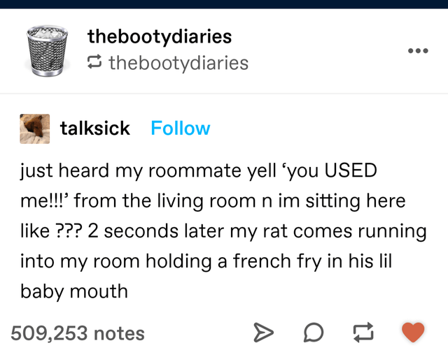 """Font - thebootydiaries 5 thebootydiaries talksick Follow just heard my roommate yell """"you USED me!!!' from the living room n im sitting here like ??? 2 seconds later my rat comes running into my room holding a french fry in his lil baby mouth 509,253 notes"""