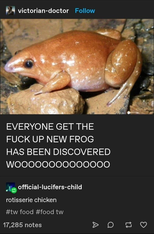 Organism - victorian-doctor Follow EVERYONE GET THE FUCK UP NEW FROG HAS BEEN DISCOVERED WOO000000000000 official-lucifers-child rotisserie chicken #tw food #food tw 17,285 notes