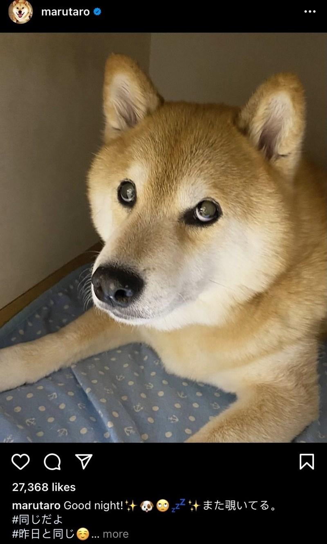 Dog - marutaro O 27,368 likes すまた覗いてる。 marutaro Good night! + #同じだよ #昨日と同じ. more : 区