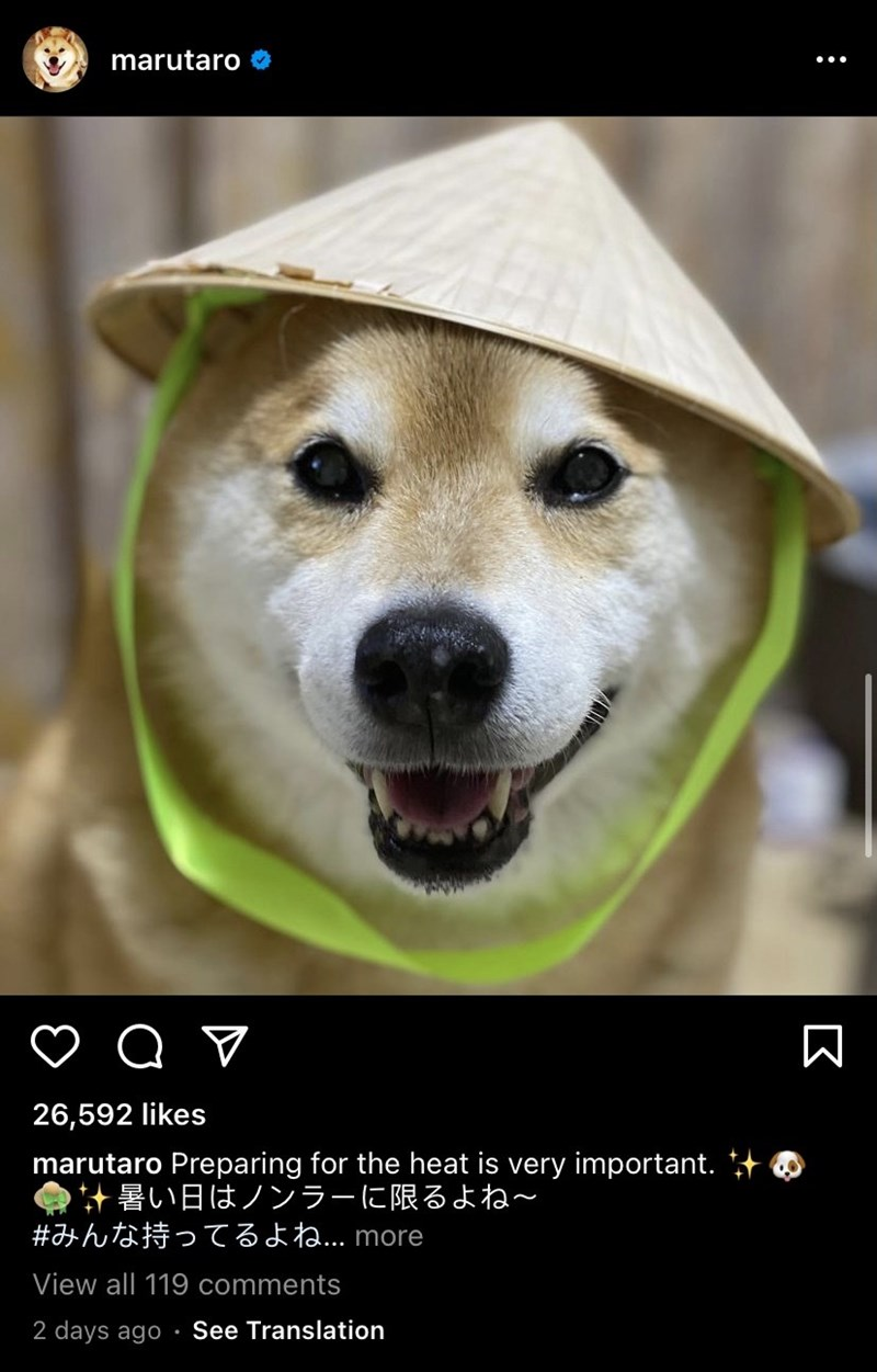 Dog - marutaro 26,592 likes marutaro Preparing for the heat is very important. + O *暑い日はノンラーに限るよね~ #みんな持ってるよね.. more View all 119 comments 2 days ago • See Translation