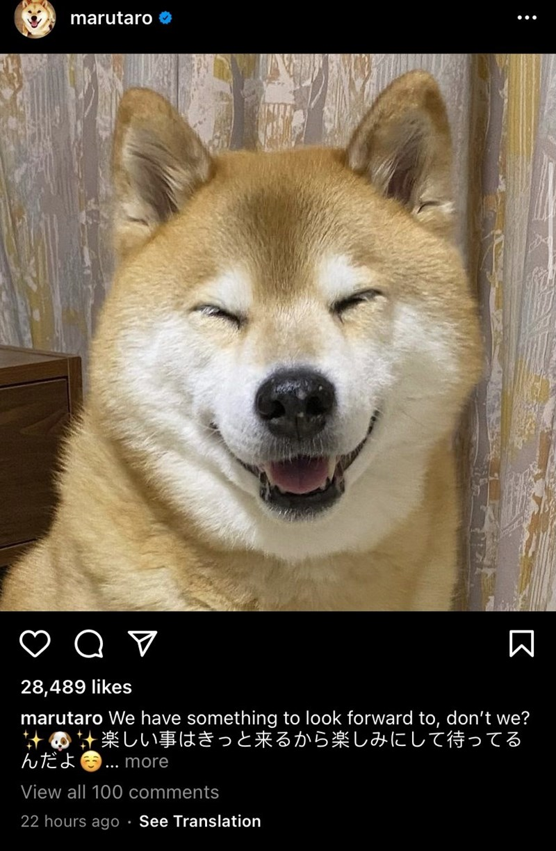 Dog - marutaro . 28,489 likes marutaro We have something to look forward to, don't we? の計楽しい事はきっと来るから楽しみにして待ってる んだよ.more View all 100 comments 22 hours ago • See Translation