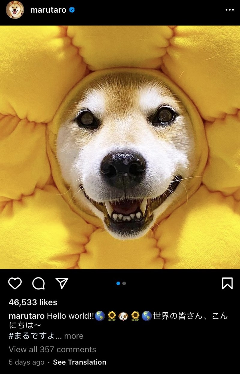Dog - marutaro O 46,533 likes marutaro Hello world!! 世界の皆さん、こん にちは~ #まるですよ.. more View all 357 comments 5 days ago See Translation