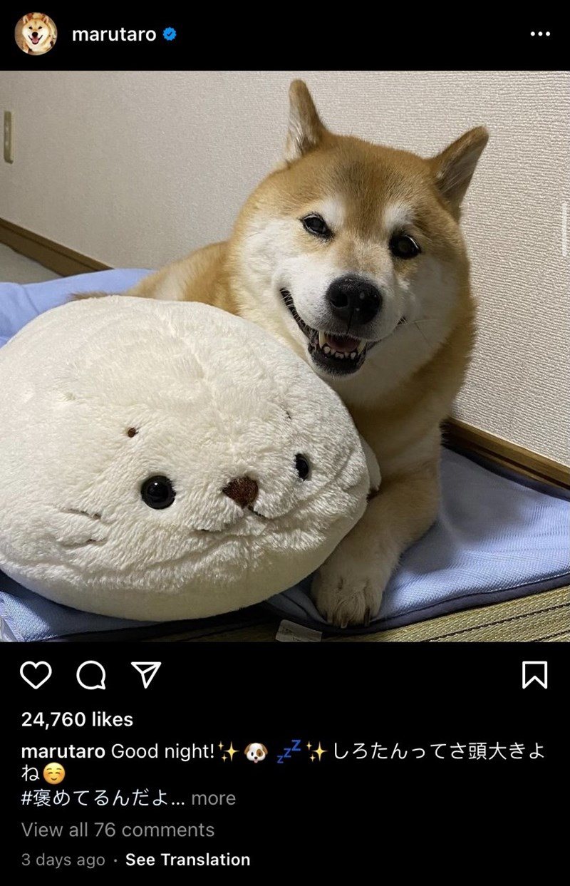 Dog - marutaro O 24,760 likes zZ#しろたんってさ頭大きよ marutaro Good night!+ ね #褒めてるんだよ.. more View all 76 comments 3 days ago See Translation