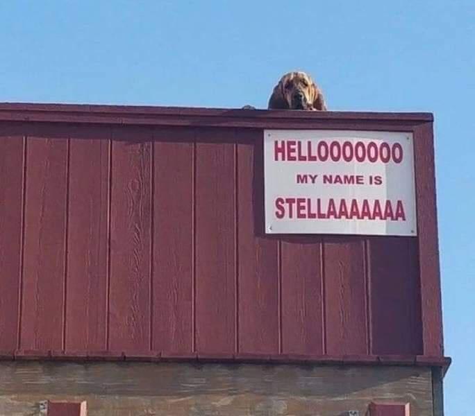 Sky - HELLOO00000 MY NAME IS STELLAAAAAAA
