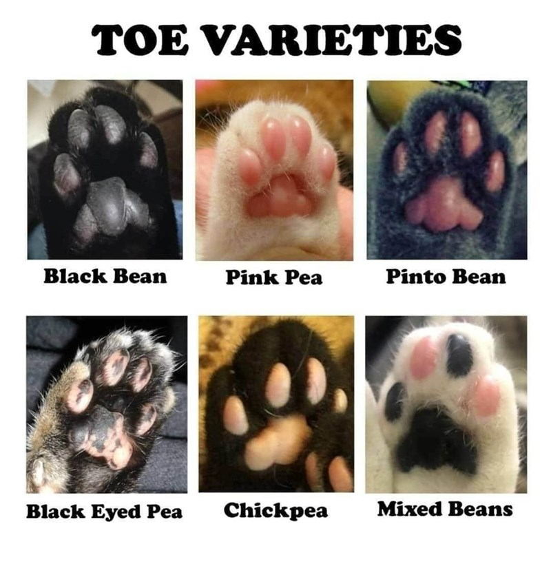 Food - TOE VARIETIES Black Bean Pink Pea Pinto Bean Black Eyed Pea Chickpea Mixed Beans