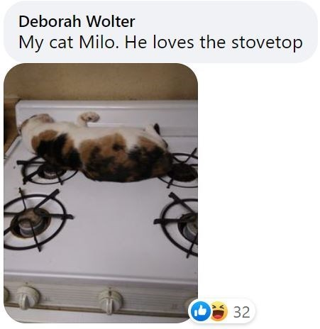 Recipe - Deborah Wolter My cat Milo. He loves the stovetop O 32