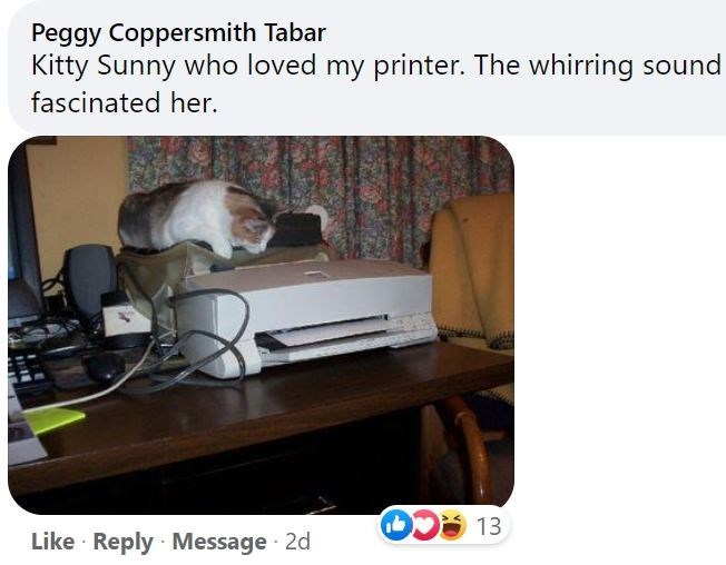 Furniture - Peggy Coppersmith Tabar Kitty Sunny who loved my printer. The whirring sound fascinated her. 13 Like · Reply Message 2d