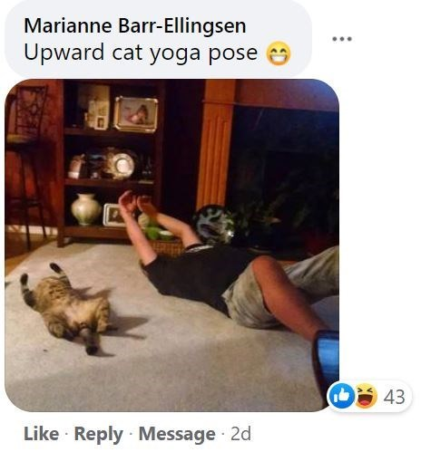 Product - Marianne Barr-Ellingsen ... Upward cat yoga pose 43 Like · Reply · Message 2d