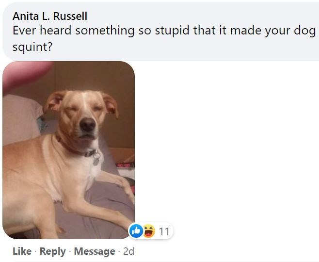 Dog - Anita L. Russell Ever heard something so stupid that it made your dog squint? 11 Like · Reply · Message 2d