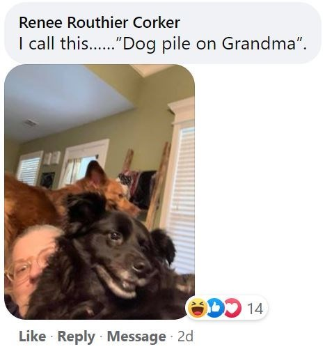 """Dog - Renee Routhier Corker I call this..""""Dog pile on Grandma"""". ODD 14 Like · Reply Message · 2d"""