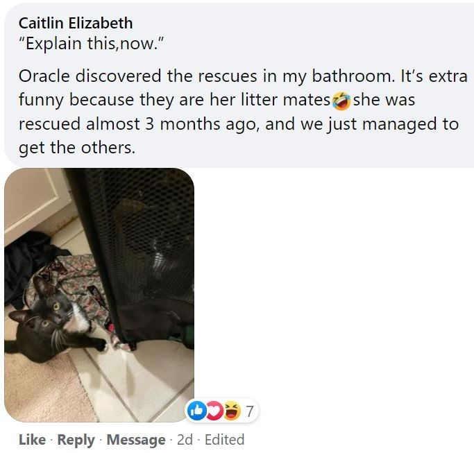 """Output device - Caitlin Elizabeth """"Explain this,now."""" Oracle discovered the rescues in my bathroom. It's extra funny because they are her litter matesa she was rescued almost 3 months ago, and we just managed to get the others. LACO Like · Reply Message 2d Edited"""