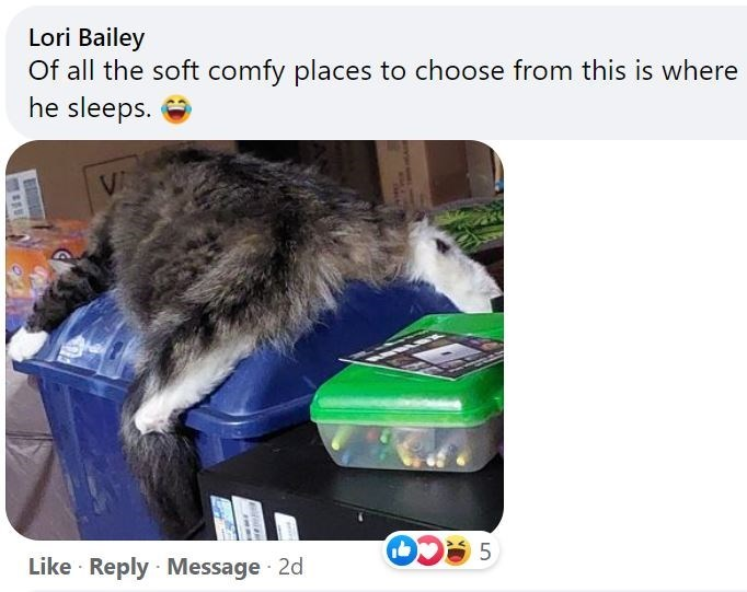 Vertebrate - Lori Bailey Of all the soft comfy places to choose from this is where he sleeps. VA Like · Reply Message · 2d LO