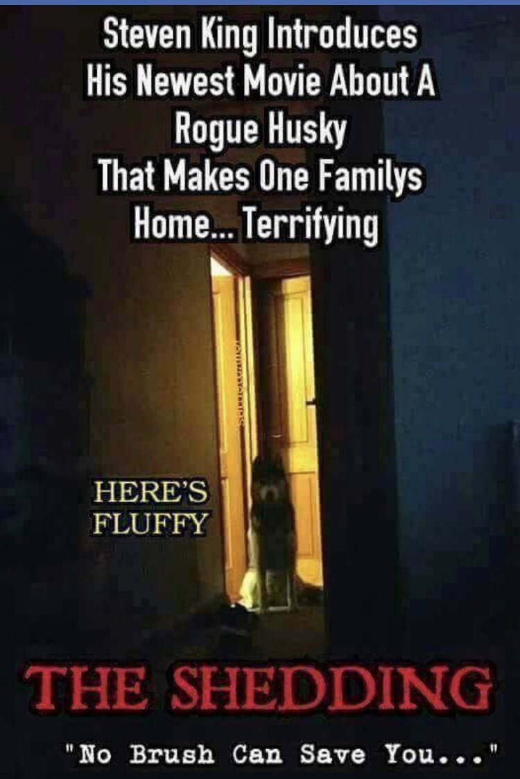 """Font - Steven King Introduces His Newest Movie About A Rogue Husky That Makes One Familys Home. Terrifying HERE'S FLUFFY THE SHEDDING """"No Brush Can Save You..."""""""