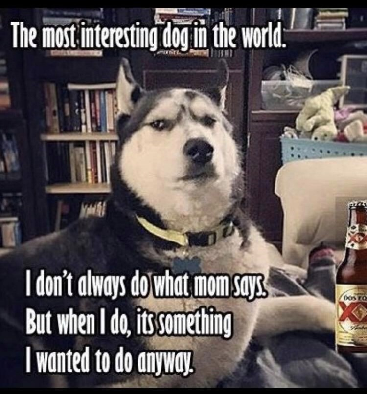 Dog - The most interesting dog in the world. I don't always do'what mom says But when I do, its something | wanted to do anyway.