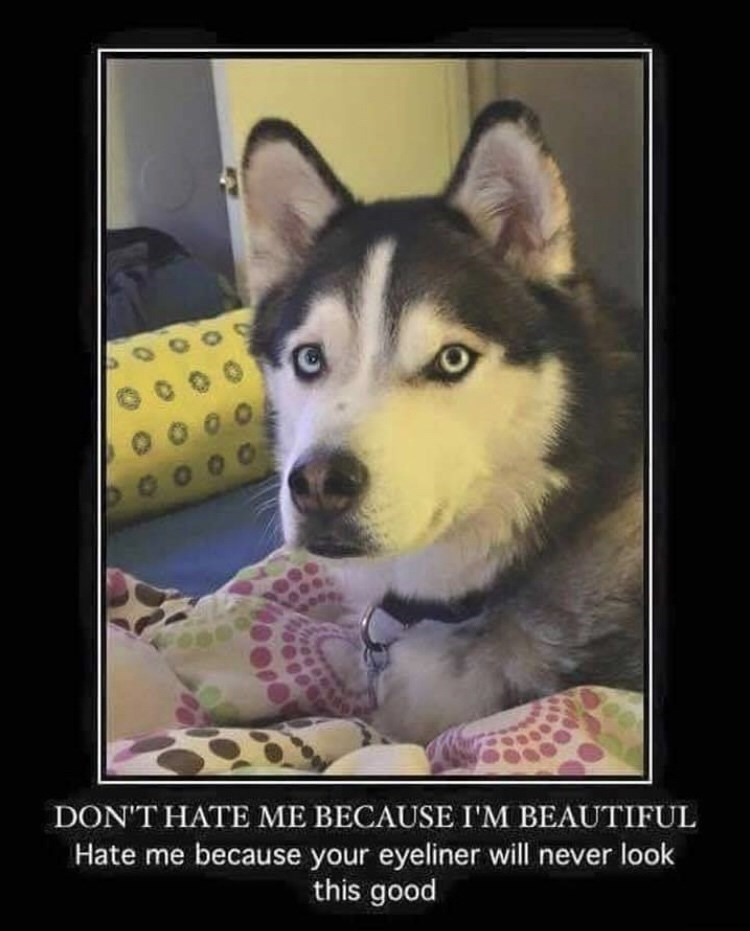 Dog - 0 0 0 C000 DON'T HATE ME BECAUSE I'M BEAUTIFUL Hate me because your eyeliner will never look this good
