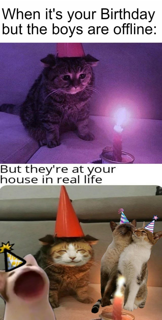 Cat - When it's your Birthday but the boys are offline: But they're at your house in real life
